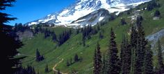 The Ultimate Guide to Mount Rainier National Park