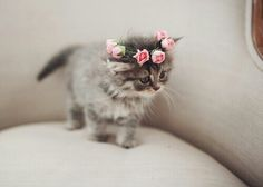 Love the pink rose wreath on its head. Sweet precious baby kitty.