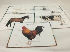 Impresiones de la anatomía de los animales de granja por MirusToys