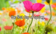 littlereasonstosmile:  2014-March 20th is the first day of Spring this year!