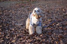 귀엽고 시크한 강아지옷 CoCCoLa 코콜라 http://www.coccola.co.kr/ 코카옷 중형견옷