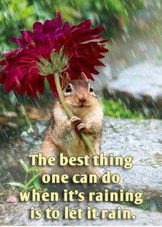 Funny Rain Quotes And Sayings. QuotesGram Funny Rainy Weather Quotes