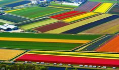 An aerial view of colourful tulip fields in Lisse, The Netherlands. Today Holland produces more than nine billion bulbs every year, with two-thirds of tulips exported across the world. Places To Travel, Places To See, Places Around The World, Around The Worlds, Bavaro Beach, Dutch Tulip, Tulip Fields, Wtf Fun Facts, Random Facts