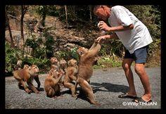 Phuket Monkey Hill