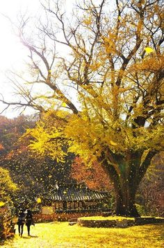 운곡서원 Beautiful World, Beautiful Places, Beautiful Pictures, Korean Painting, Flowers Nature, Great View, Nature Photos, Art Pictures, Wallpaper Backgrounds