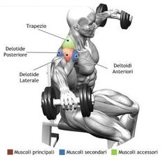"""The common phrase """" to carry a weight on your shoulders"""" is more true than you think, shoulders top off any great physique, they are the mu..."""