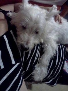 My dog name is HARU, HARU=spring