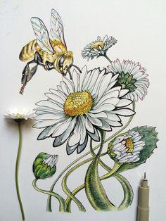 """""""Noel Badges Pugh"""" – Tatoo for Noel Botanical Drawings, Botanical Art, Watercolor Flowers, Watercolor Paintings, Floral Drawing, Daisy Flower Drawing, Daisy Art, Drawing Flowers, Flower Sketches"""