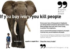 """""""When you buy ivory, you kill people""""--horrific stories about the illegal ivory trade Elephant Quotes, Elephant Love, African Elephant, African Animals, Animal Cruelty Quotes, Yulin Dog Festival, Rainforest Habitat, Ivory Trade, Culture"""