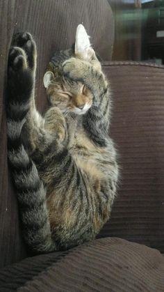 """LeeLuu """"Kitty"""" Dallas http://ift.tt/2dH8UlE"""