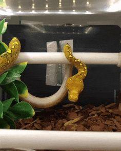 Animated GIF - Snake going to sleep Funny Animal Memes, Funny Animal Videos, Cute Funny Animals, Funny Animal Pictures, Nature Animals, Animals And Pets, Baby Animals, Beautiful Creatures, Animals Beautiful