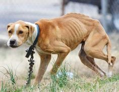 Determined to save a starved dog, animal rescuers dodge bullets in their attempt to rescue him.