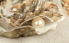 Perlen in der Natur und als Zucht