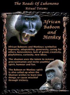 ∆ Spirit Animals...African Baboon & Monkey Totem