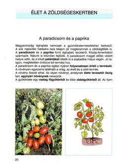 4. feladat Food, Red Peppers, Hoods, Meals