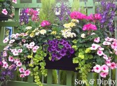 Planter Designs, Sow and Dipity 15