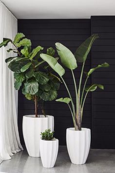 Gorgeous Plants Featuring a unique rippled design, Allia Concrete Planters can be inserted with lush greenery to add interest to both gardens or indoor spaces Plantas Indoor, House Plants Decor, Indoor Plant Decor, Indoor Green Plants, Indoor House Plants, Plants In Living Room, Indoor Trees, Plants In The Home, Outdoor Potted Plants