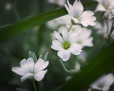 White Curves by Deanna Ramsay on 500px