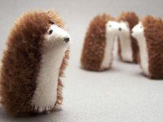 Hedgehogs!! Cute!