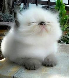 OMG! Have you ever seen such a fluffy kitten?