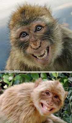 Grin & Bear It: 12 Sweetly Smiling Animals - WebEcoist Smiling Animals, Happy Animals, Animals And Pets, Funny Animals, Cute Animals, Funny Animal Pictures, Cute Pictures, Los Primates, Cute Monkey