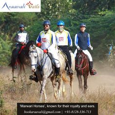 A horse doesn't care how much you know until he knows how much you care. Put your hand on your horse and your heart in your hand. Visit Araavali Trails and experience the best horse riding in the midst of nature.. For more details visit our website - www.araavalitrails.com  or call us on - 098797 54204   #horseriding #nature #naturevibes #freshair #marwarihorse #royalhorse #swimmingpool #resort #palanpur #palanpurtrip #palanpurdiaries #palanpurcity #araavalitrails Marwari Horses, Horse Riding, Riding Helmets, Swimming Pools, Trail, Royalty, Website, Heart, Nature