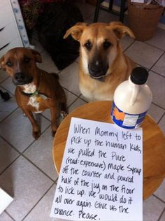 Partners In Crime 31 Pics - Funny Dog Quotes - funny animal pictures Shaming pictures funny dogs dog cats cat Animals The post Partners In Crime 31 Pics appeared first on Gag Dad. Dog Quotes Funny, Funny Animal Memes, Funny Animal Pictures, Funny Memes, Hilarious, Animal Humor, Pet Memes, Animal Pics, Funny Signs