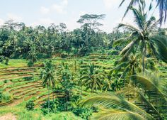 The ultimate guide to Ubud! Experience the heart of Bali known for it's lush green rice terraces, old traditions, spirituality and clean living.