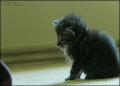 Top 15 Very Funny Cat GIFs #hilarious