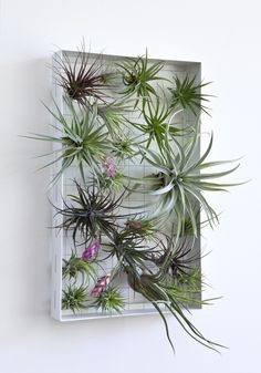 AirplantFrame - rectangle