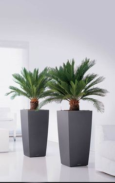 Planters | Planters and Indoor Plant Containers for Sale Online, UK