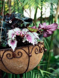 Let Your Houseplants Spend a Summer Outdoors - Here's a tip for saving money when creating hanging baskets: Use what you have. Many houseplants grow well outdoors in a shaded spot. Rex begonias, for example, play off each other to great effect. In fall, bring them back indoors to enjoy them for the winter season.