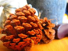 two pinecones