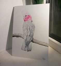 Hey, I found this really awesome Etsy listing at https://www.etsy.com/listing/596393197/galah-cockatoo-watercolor-painting