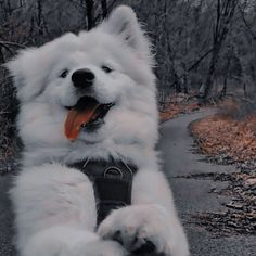 Cute Wild Animals, Cute Funny Animals, Animals And Pets, Cute Cats, Cute Baby Dogs, Cute Little Puppies, Cute Puppies, Cute Dog Photos, Cute Animal Photos
