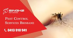 Worried about the mosquito problem in your home? Eliminate mosquito problems now, hire us! #PestControl #PestRemoval #Brisbane