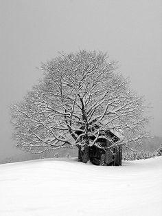 drxgonfly:  Winter wonderland by RainerSchuetz on Flickr.
