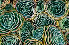 Succulent flowerettes by Deana Rae on 500px