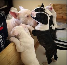 Kisses for all! OMG the black and white pups are beautiful