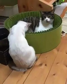 One Punch Cat😼 Please leave me alone! One Punch Cat😼 Please leave me alone! Funny Animal Memes, Funny Animal Videos, Cute Funny Animals, Funny Animal Pictures, Cute Cats, Funny Cats, Pet Memes, Animal Humor, Animals And Pets