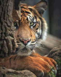 Wildlife Nature, Nature Animals, Animals And Pets, Baby Animals, Cute Animals, Nature Nature, Beautiful Cats, Animals Beautiful, Beautiful Places