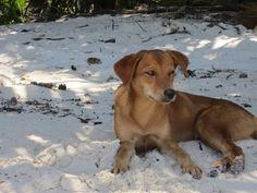 Strandhund, Seychellen