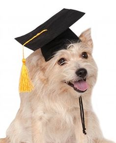 Dog Hats - Rubies Black Graduation Hat Pet Accessory SmallMedium -- Learn more by visiting the image link. (This is an Amazon affiliate link)