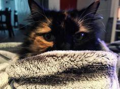 Petite partie de cache cache #cat #cats #sunday #catsagram #catstagram #instagood #kitten #kitty #kittens #pet #pets #animal #animals #petstagram #petsagram #photooftheday #catsofinstagram #ilovemycat #instagramcats #followme #lovecats #lovekittens #adorable #catlover #instacat #iphone6 #cachecache #becool