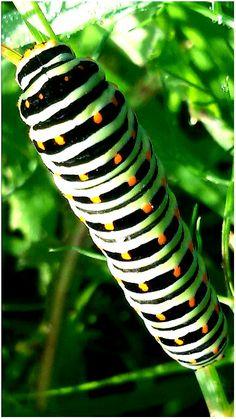 Sworm