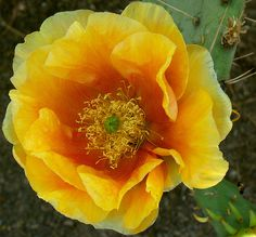 One Special Cactus Flower