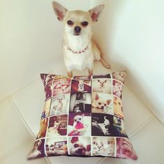 A pillow covered in pics of your favorite pup? What could be better? No, seriously.