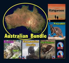 Australian Animals: Non Fiction Resources: This bundle comes with * All 7 Australian animal interactive PowerPoint presentations. by Rya Science Lessons, Science Activities, Classroom Activities, Science Fun, Summer Activities, Australia Continent, Tasmanian Devil, Koala Bears, Elementary Science