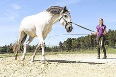 5 Übungen: Muskeltraining für Pferde
