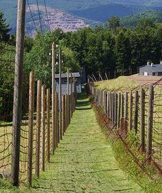 Natzweiler-Struthof Concentration Camp in Alsace